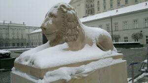 Lwy wróciły przed Pałac Prezydencki